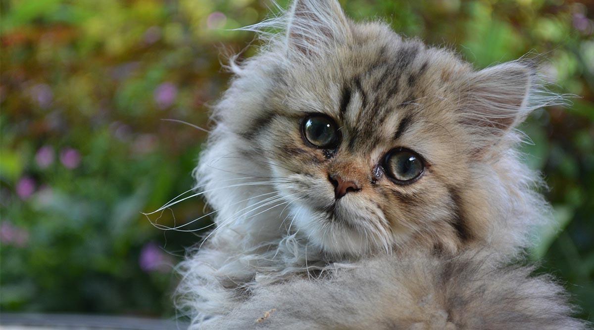 Los gatos. Criaturas que enamoran (y mejoran la salud)