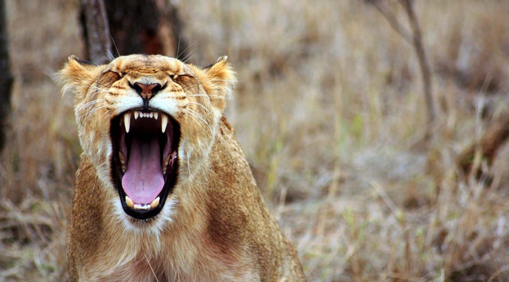Cómo controlar la ira (y que ella no te controle a ti)
