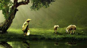 La importancia de mantener el contacto con la naturaleza